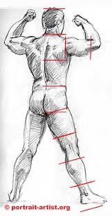 drawing the figure getting the proportions of the human figure