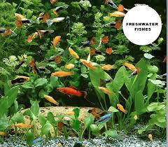 aquarium fish industry in malaysia