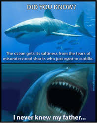 Shark Meme - 25 best memes about misunderstood shark misunderstood shark