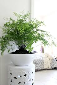 Indoor Plant Design by Best 25 Good Indoor Plants Ideas On Pinterest Air Cleaning