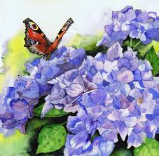 peacock butterfly on blue hydrangeas by uk artist julie horner