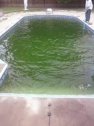 the ultimate guide to pool algae sunplay