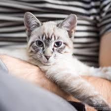 Cat Instagram Cats Of Instagram Daily Doses Of Original Cute Cat Photos