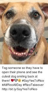 Dog Smiling Meme - 25 best memes about dog smiling dog smiling memes