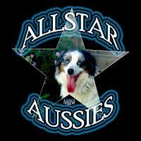 australian shepherd socal all star mini aussies