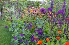 Summer Garden Plants - 8 best flowering plants for a colourful garden display summer garden