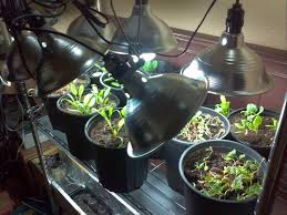 veggies and finches cfl vegetable grow lighting