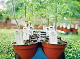 Backyard Vegetable Gardening by Backyard Vegetable Gardening Cooking Light