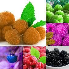 online buy wholesale indoor fruit plants from china indoor fruit