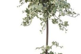 does keeping a tree in a small pot keep it from growing