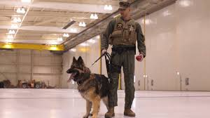a military working dog handler youtube