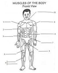image result for passive and active transport worksheet answers