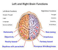 gallery right side of the brain and their functions human