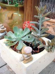 cactus at east austin succulents concrete planters