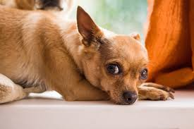 Do Bed Bugs Get On Dogs Pet Safe Roach Killer How To Repel Roaches Without Harming Dogs