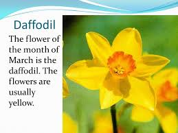 Flowers Of The Month Twelve Flowers Of The Year Ppt Download