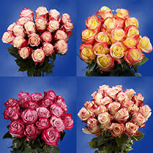 multi colored roses multi colored roses overnight global
