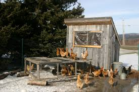 easy way to build chicken coop with easy chicken coop floor plans