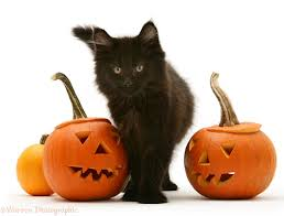 halloween background cat and pumpkin black smoke cat rubbing past a halloween pumpkin photo wp14826