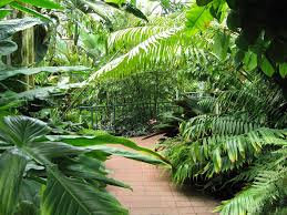 Tropical Plants Images - pathway lined with tropical plants