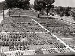 Victory Garden Layout Chicago Victory Gardens Archives Garden For Your Inspiration