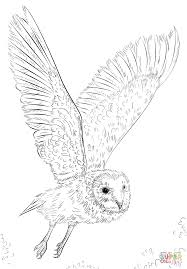barn owl in flight coloring page free printable coloring pages