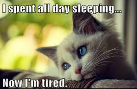 All Day Meme - 70 most awesome sleep memes