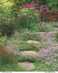 thyme the fragrant ground cover gardening