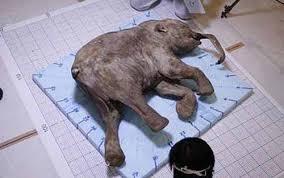 woolly mammoths mastodons crystalinks