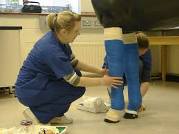 bsc in veterinary nursing applied sciences of health