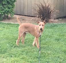 animal crackers dog grooming 14 reviews pet groomers 590