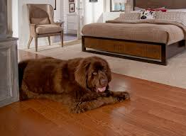 Laminate Flooring And Pet Urine Best Flooring Choices For Pets Coles Fine Flooring