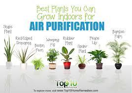 best indoor plants slucasdesigns com