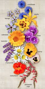 flowers edible the guide to edible flowers