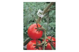 tomato trellis clips 500 count johnny u0027s selected seeds
