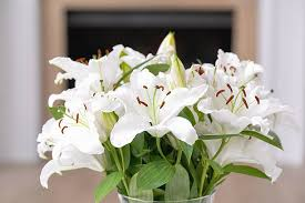 White Lily Flower White Lily Pictures Images And Stock Photos Istock