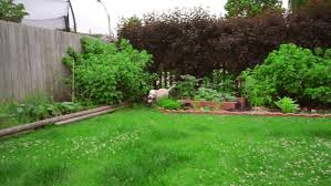 Dog In The Backyard by Cute Gardener Man Mowing Lawn In The Backyard Of His House Guy