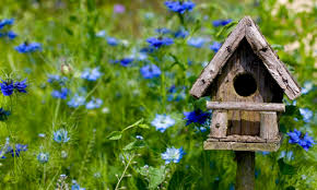bird house plans to build house design plans bird house plans to build