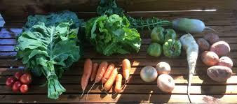 week 22 cully neighborhood farm