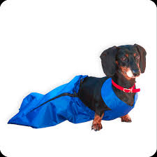handicapped pets blind dogs advice u0026 products to help them