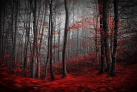 red carpet forest wall mural red carpet forest wallpaper red carpet forest wall mural photo wallpaper