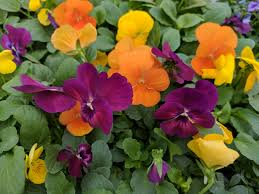 Pretty Plants by Reluctant To Plant Since It U0027s Still Cold Here Are 5 Pretty Plants