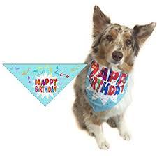 australian shepherd happy birthday amazon com happy birthday dog bandana dog birthday scarf