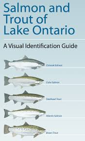 lake ontario trout and salmon a guide fair point marina