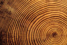 tree rings tell many tales newsmobile