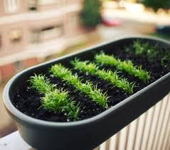 Urban Veggie Garden - 6 strategies for urban vegetable gardening