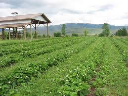 dude u0027s organic farm organic u pick farm