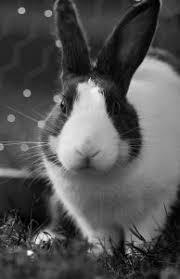 bunny pets