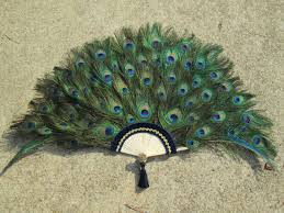 peacock feather fan large peacock feather fan for home decor 22 by 47
