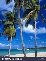 st louis with palm trees galante island guadeloupe